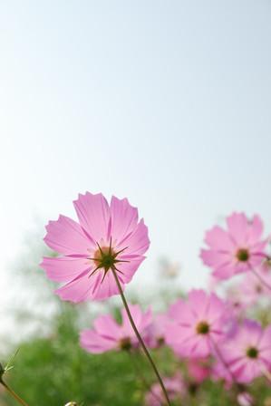 AZUMINO_20090907_3.jpg