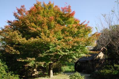 AZUMINO_20091021_1.jpg