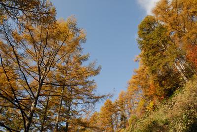 AZUMINO_20091022_2.JPG