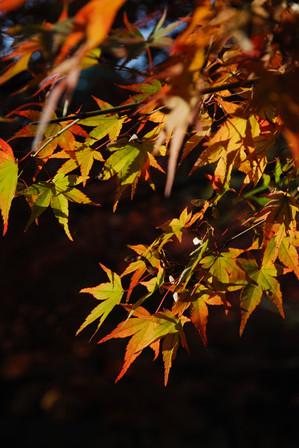 AZUMINO_20091030_2.jpg