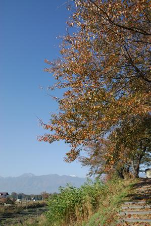AZUMINO_20091106_1.JPG