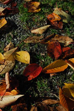AZUMINO_20091106_3.JPG