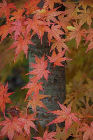 AZUMINO_20091107_4.JPG