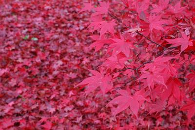 AZUMINO_20091112_2.JPG