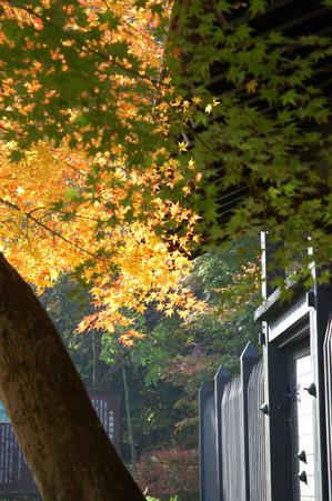 AZUMINO_20051111_5.jpg