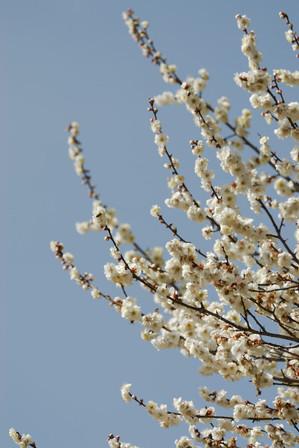 AZUMINO_20100320_2.JPG