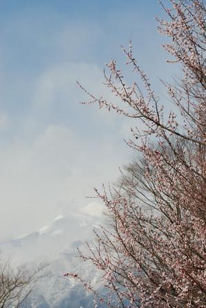 AZUMINO_20100327_1.JPG