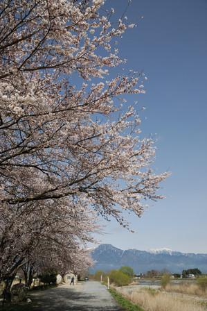 AZUMINO20100413_3.JPG