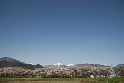 AZUMINO20100414_2.JPG