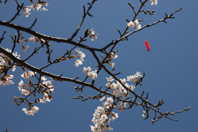 AZUMINO20100501_15.JPG