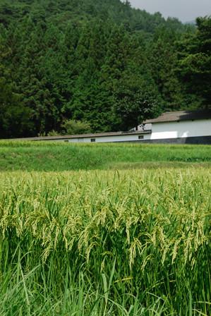 AZUMINO_20100817_1.JPG