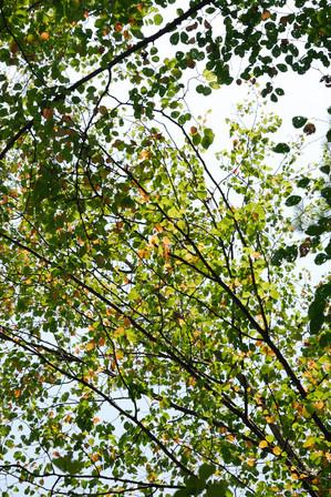 AZUMINO_20100828_2.JPG