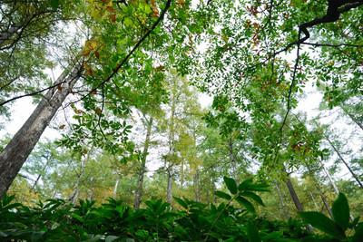 AZUMINO_20101017_12.JPG