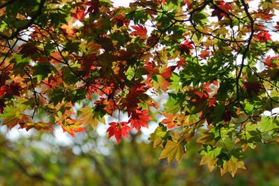 AZUMINO_20101017_15.JPG