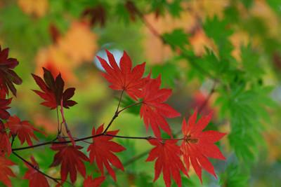 AZUMINO_20101017_16.JPG
