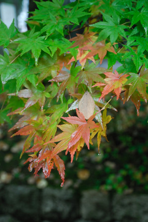 AZUMINO_20101025_2.JPG