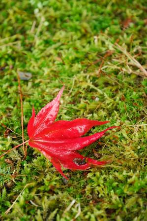 AZUMINO_20101025_3.JPG