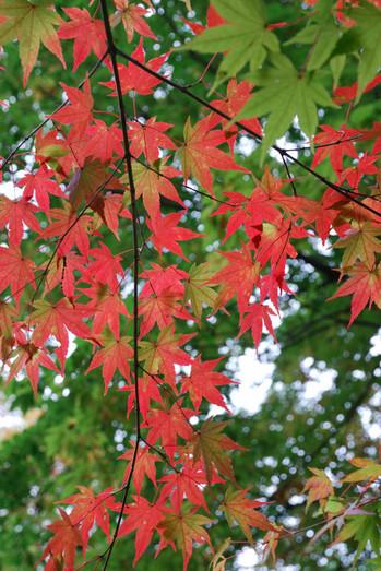 AZUMINO_20101031_2.JPG