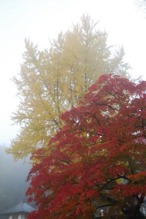 AZUMINO_20101105_2.JPG