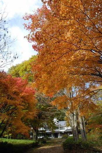 AZUMINO_20101107_8.JPG