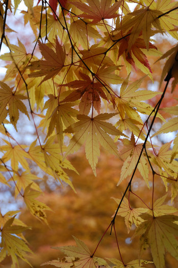 AZUMINO_20101107_9.JPG