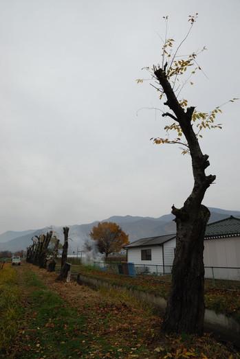 AZUMINO_20101114_7.JPG
