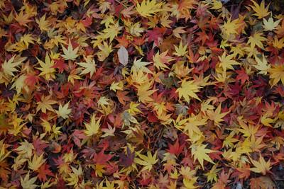 AZUMINO_20101117_3.JPG