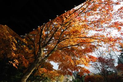 AZUMINO_20101117_5.JPG