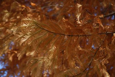 AZUMINO_20101126_2.JPG