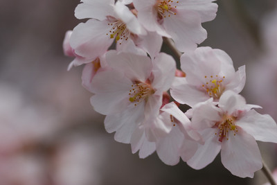AZUMINO_20110411_6.JPG