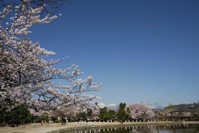 AZUMINO_20110417_3.JPG