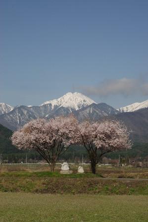 AZUMINO_20110421_1.JPG