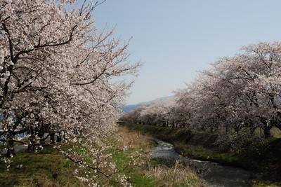 AZUMINO_20110424_1.JPG
