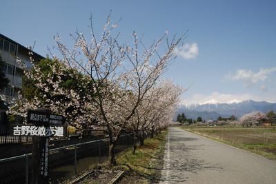 AZUMINO_20110424_14.JPG