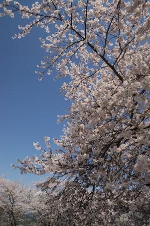 AZUMINO_20110424_3.JPG