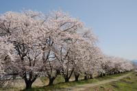 AZUMINO_20110424_4.JPG