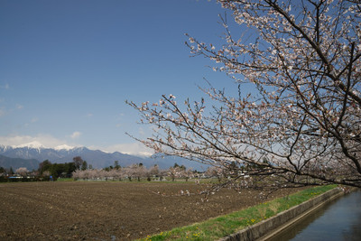 AZUMINO_20110424_9.JPG