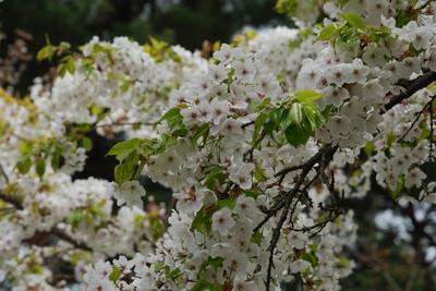 AZUMINO_20110502_10.JPG