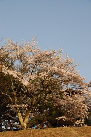 AZUMINO_20110505_6.JPG