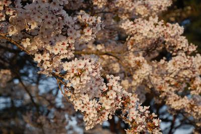 AZUMINO_20110505_7.JPG