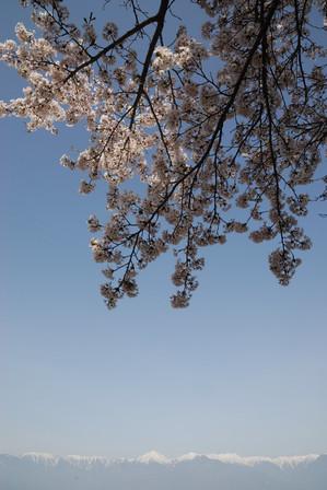 AZUMINO_20110506_3.JPG