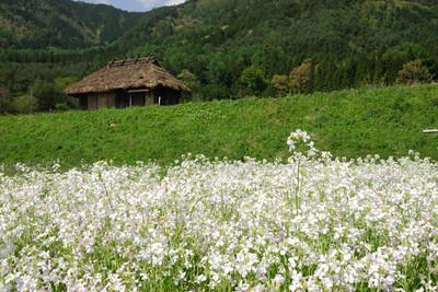 AZUMINO_20110514_11.JPG
