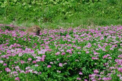 AZUMINO_20110514_20.JPG