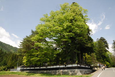 AZUMINO_20110514_4.JPG