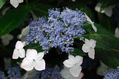 AZUMINO_20110708_3.JPG