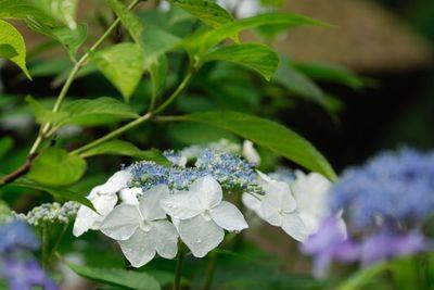 AZUMINO_20110708_5.JPG