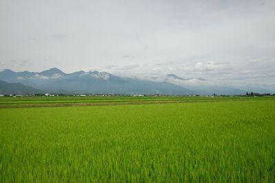 AZUMINO_20110718_3.JPG