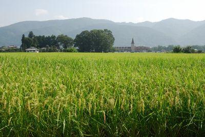 AZUMINO_20110830_1.JPG