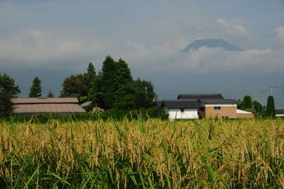 AZUMINO_20110830_3.JPG