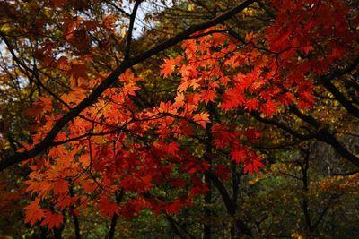 AZUMINO_20111017_1.JPG